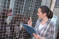 检查狗状态的女性狗窝雇员 免版税库存照片