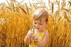 检查的孩子钉牢麦子 库存照片