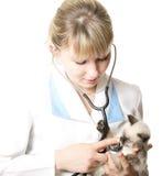 检查的小猫兽医 免版税图库摄影