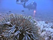 检查礁石 库存图片