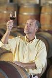 检查红葡萄酒的质量的人在地窖里 免版税库存图片