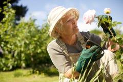 检查花的资深妇女在庭院里 免版税库存图片