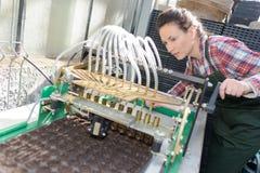 检查葡萄酒酿造工厂的妇女 库存照片