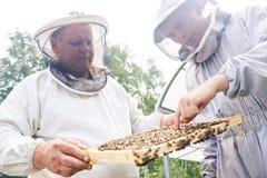 检查蜂房的两名蜂房工作者 库存照片