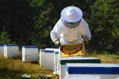 检查蜂箱的蜂农 库存图片