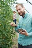 检查西红柿的农业工作者画象使用二 库存照片