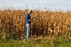 检查麦地的农夫 免版税图库摄影