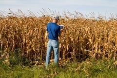 检查麦地的农夫 库存照片