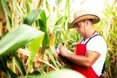 检查他的玉米田的农夫 免版税库存图片
