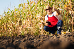 检查他的玉米田的农夫 免版税库存照片