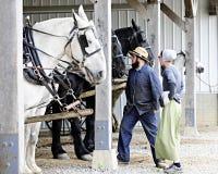 检查他们的马的门诺派中的严紧派的夫妇 免版税图库摄影