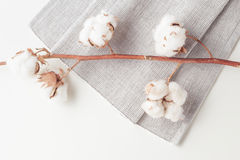 棉树在白色背景的花分支 库存图片
