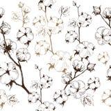 棉树有机词根白色背景的 免版税库存图片