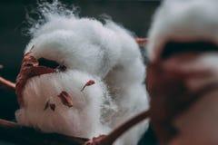 棉树蓬松棉花球在木桌上的 免版税图库摄影
