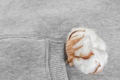 棉花发芽分支。 免版税库存照片