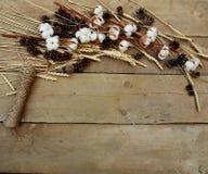 棉花和麦子在木背景 免版税库存图片