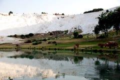 棉花堡,土耳其风景, 免版税库存图片