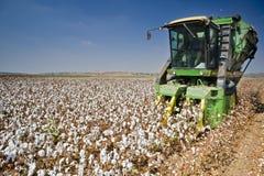 棉花收获 免版税库存图片