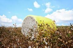 棉花模块 图库摄影