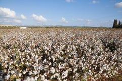 棉花领域 库存照片
