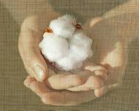 棉花1oo百分之创造性的概念 免版税库存图片