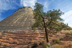棋盘峭壁mesa国家公园砂岩风景美国犹他视图zion 库存图片