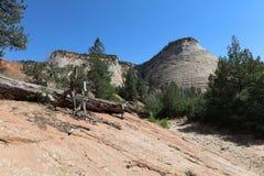 棋盘Mesa在锡安国家公园 库存照片