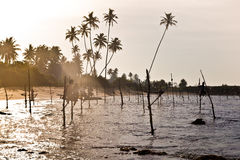棍子的斯里兰卡的传统渔夫在印度洋 图库摄影