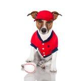 棒球狗 免版税库存图片