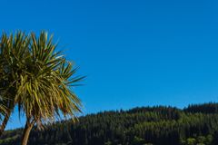 棕榈、蓝天和森林 Lamlash,艾伦,苏格兰 库存图片