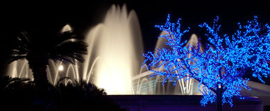 棕榈、被突出的喷泉和光亮树剪影在巴塞罗那在夜 库存照片