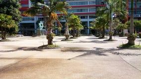 棕榈三 库存图片