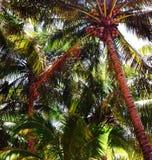 棕榈乌托邦 免版税图库摄影