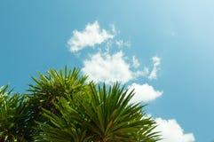 棕榈事假和非常蓝天与云彩 库存照片