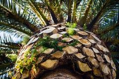 棕榈从下面 库存图片