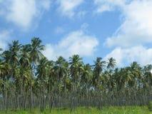 棕榈全景 库存照片