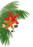 棕榈分支、海星、小卵石和海扇壳 免版税库存图片