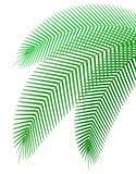 棕榈分支传染媒介例证 免版税库存照片