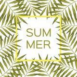 棕榈分支框架 夏天与棕榈树框架的传染媒介背景 图库摄影