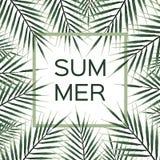 棕榈分支框架 夏天与绿色棕榈树框架的传染媒介背景 免版税库存照片