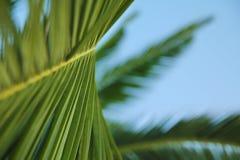 棕榈分支背景 免版税库存图片