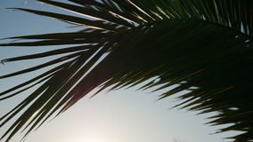 棕榈分支 免版税图库摄影
