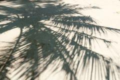 棕榈剪影在一热带islan的一个沙滩分支 库存照片