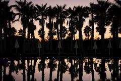 棕榈剪影荡桨和伞,在日落天空背景  免版税库存照片