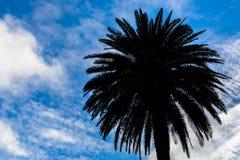 棕榈剪影 库存照片