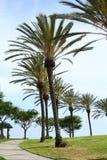 棕榈发辫所有  免版税库存图片