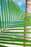棕榈叶、蓝色海和热带白色沙子靠岸 免版税图库摄影