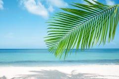 棕榈叶、蓝色海和热带白色沙子靠岸 免版税库存图片