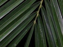 棕榈叶与喂光树荫和阴影的细节特写镜头 库存图片