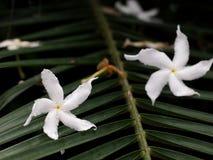 棕榈叶与喂光树荫和阴影的细节特写镜头 免版税库存照片